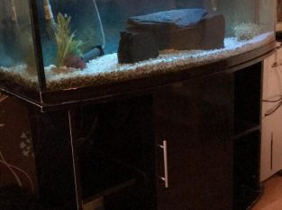 Full Setup 4ft Gloss Black Bow Front Fish Tank With Fluval 406 Filter, Also A 3 Ciclids ornaments