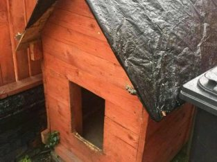 Good condition Big doghouse