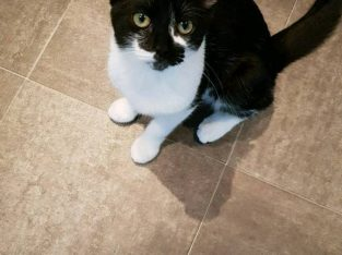 Black and white kitten 4 month old
