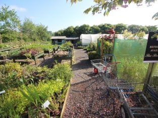 Very Attractive Plant Centre & Nursery, Devon – For Sale