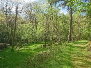 Woodland Near Cheriton Bishop, Exeter, Beautiful, Secluded, peaceful, 4.75 Acre