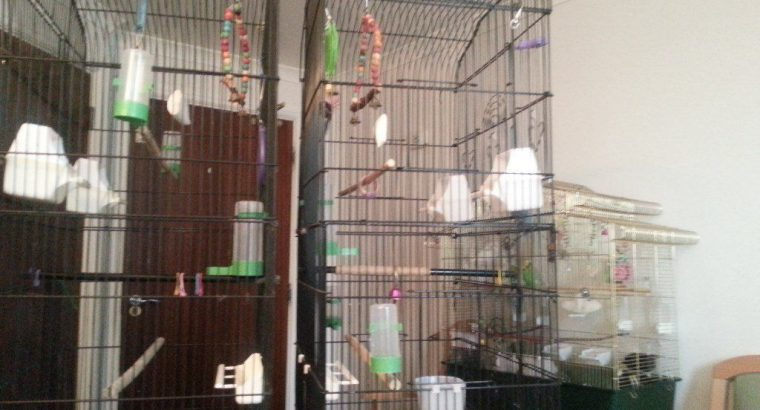 £50 BIRD CAGES budgies cockateil canary parakeetswith bits