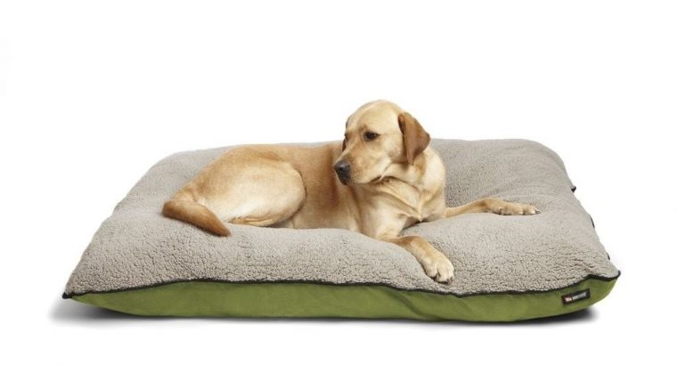 NEW Big Shrimpy Bogo Dog Bed – Medium