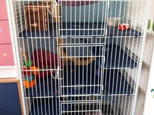 Cage for larger sized rodent