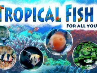 Sheffield Tropical Fish Shop