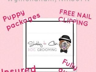 Professional Shabby to Chic Dog Grooming