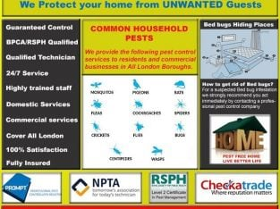 BedBugs Fumigation Extermination & Get rid of Cockroaches|Rat, Mice|Ants, Pest Control