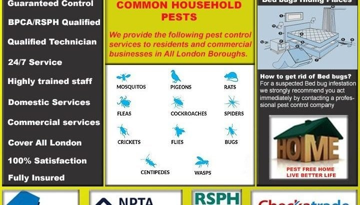 BedBugs Fumigation Extermination & Get rid of Cockroaches Rat, Mice Ants, Pest Control