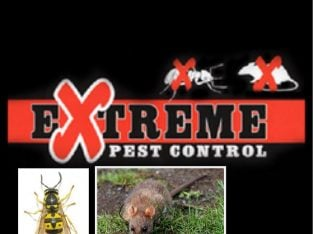 Wasps -Rats – mice – bed bugs – fleas – Extreme pest control Leicester