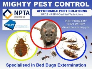 Mice|Bed bugs|Cockroaches|Ants|Wasps|treatment Beckton East Ham Forest Gate – Pest & Vermin Control