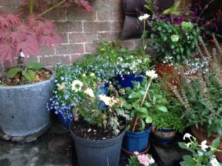 All indoor, greenhouse and outdoor Plant Watering Service