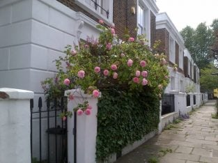 2 bed Victorian maisonette by Hampstead Heath LB of Camden(Council) swap for a property witha garden
