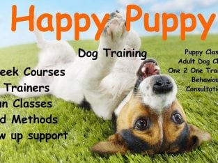Adult and Puppy Dog training classes