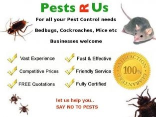 Guaranteed Fast Pest Control & Exterminator – Rats, Mice, Bed Bugs and Cockroaches