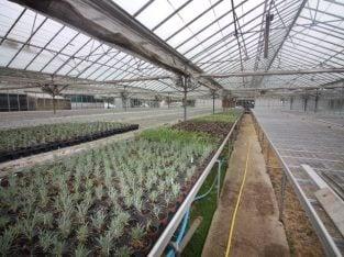 For Sale Wholesale Nursery/Garden Centre Opportunity, Surrey
