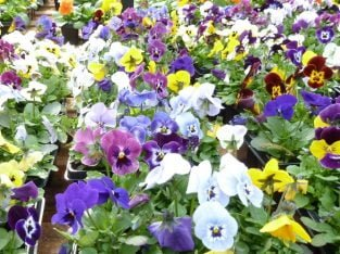 Freehod Garden Centre With Farm Shop And Licenced Cafe/Restaurant For Sale