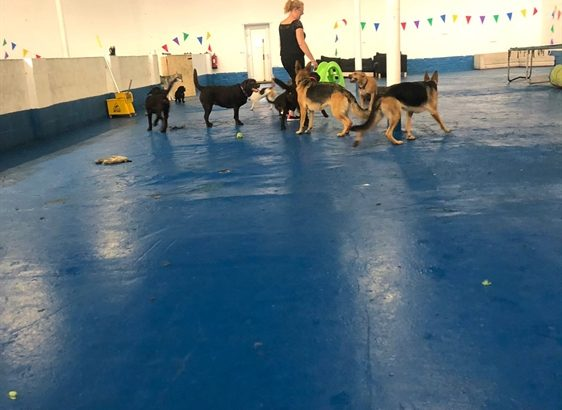 Leasehold Doggy Day Care Business For Sale
