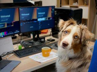 Legend Acres On-Demand Dog Training Fundamentals