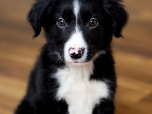 Got a new puppy? What I need to know?