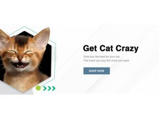 Best Online Store for Kitten and Cat Products